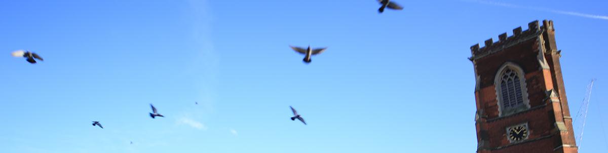 Birds flying near tower